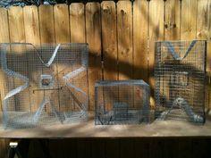 Related Photos: Bait Traps - Perch, Bream, Pinfish, Pollywog (East Texas) - AdsInUSA.com