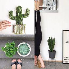 Urban Jungle Bloggers: Plantselfie by @sophiagaleria