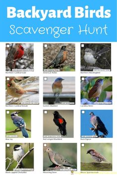 Print our backyard bird scavenger hunt to mark off what birds you find. The printable has 16 photos of common backyard birds. Adult Scavenger Hunt, Backyard Scavenger Hunts, Scavenger Hunt List, Backyard For Kids, Backyard Birds, Garden Birds, Backyard Ideas, Treasure Hunt For Kids, Birds For Kids