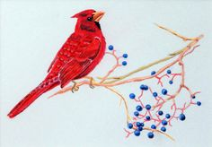Cardinal With Berries Original Pastel Drawing by TanyaProvines, $75.00