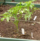 Container Veggie Garden - the best veggie garden for small spaces