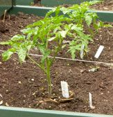 Container Veggie Garden - the best veggie garden for small spaces