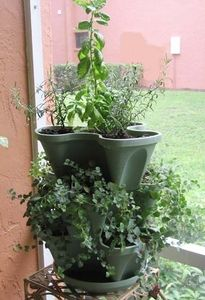 Tips on Growing Herbs from Seeds