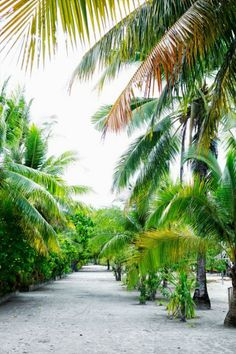 A palm-lined lane on Arborek Island