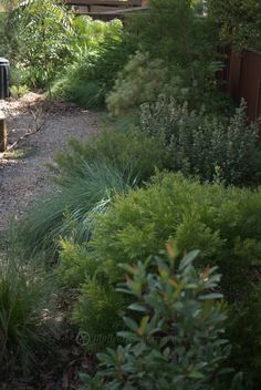 Good plant mix and textures colours Lush waterwise gardens BACKYARD Australian Garden Design, Australian Native Garden, Garden Spaces, Garden Beds, Bush Garden, Back Gardens, Outdoor Gardens, Coastal Gardens, Garden Cottage