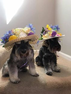 Happy Easter all our schnauzer friends