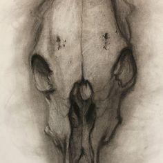 cow+head+skull+sketch. drawing idea.