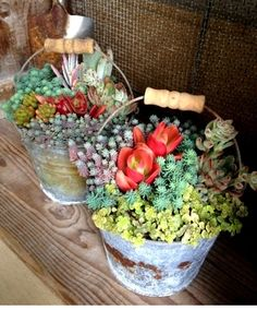 Succulent garden in an old pail...I've got an old bucket that is crying out for this!