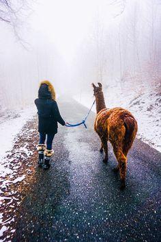 G Adventures, Europe Destinations, Dream Life, Switzerland, Travel Photos, Camel, Hiking, Snow, Mountains