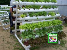 Hydroponic Gardening 45 Ways PVC Pipe Can Transform Your Home - Your home can look like a brand new place with a few PVC projects. Pvc Projects, Garden Projects, Pvc Pipe Garden Ideas, Hydroponic Gardening, Container Gardening, Gardening Hacks, Organic Gardening, Aquaponics Plants, Gardening Vegetables