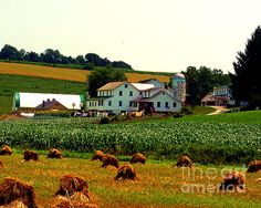Amish Farm on Laundry Day by Desiree Paquette. Available online at Fine Art America. keywords: amish, rural America, agriculture, farm, haystacks, cornfield, barn, buggy