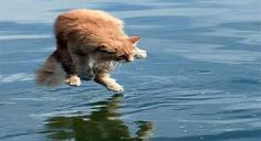 Fish and Cat Story | Hapbalili Good Jokes To Tell, Funny Jokes For Adults, Corgi, Fish, Cats, Animals, Adult Dirty Jokes, Corgis, Gatos