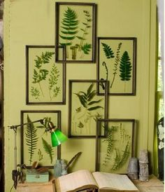 Framed ferns, love the glass frames so as to visualize both sides of the botanic specimens...