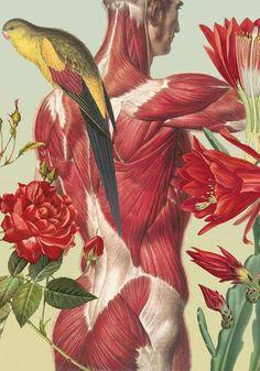 Clase de anatomía botánica con Juan Gatti