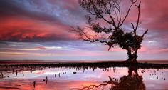 Bing Image Archive: Sunset over tidal area in Brisbane mangrove tree (© visionandimagination.com / Getty Images)(Bing United Kingdom)