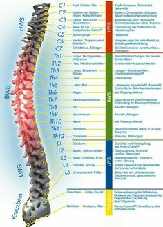 Pin on Spinal cord Pin on Spinal cord Alternative Heilmethoden, Alternative Health, Health Tips, Health And Wellness, Health Fitness, Wellness Spa, Bola Medicinal, Spine Health, Abdominal Pain