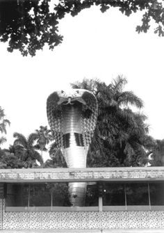 Cobra at the entrance to the Miami Serpentarium circa early 80's. It was later donated to South Miami Senior High School, home of the Cobras.