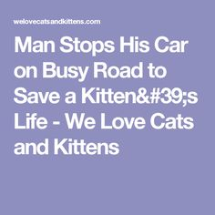 Man Stops His Car on Busy Road to Save a Kitten's Life - We Love Cats and Kittens
