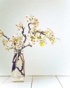 Pear Blossom - dreamy flower photography spring nursery decor wedding gift for her soft colors patels romantic white mint cream nature woman. $30.00, via Etsy.