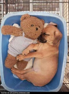 ...puppy love!   # Pin++ for Pinterest #