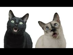PPAP Pen Pineapple Apple Pen (Cat Version) - YouTube