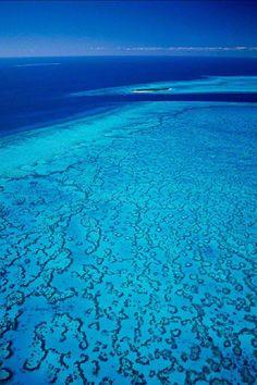 Mother of Pearl - Heron Island, Wistari Reef, Queensland
