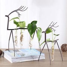 Look to the Metal Deer Stand with Test Tube Vases to bring a splash of green to your home. Find more office desk accessories at the Apollo Box. Hanging Plants, Potted Plants, Indoor Plants, Apollo Box, Accent Wall Bedroom, Temporary Wall, Red Rooms, Plant Decor, Vases Decor