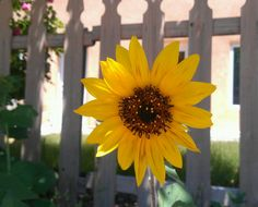 Weather Underground provides local & long range Weather Forecast, weather reports, maps & tropical weather conditions for locations worldwide. Big And Beautiful, Beautiful Flowers, Pocket Full Of Sunshine, Hello August, Sun Flowers, Sunflower Art, It's Always Sunny, Weather Underground, Sun Shine