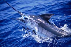 Sport Fishing, Fly Fishing, Fishing Tips, Fish Jumps, Marlin Fishing, After Game, Fishing World, Blue Marlin, Big Fish