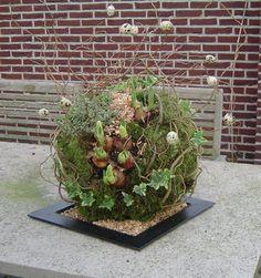 http://www.devierseizoenenwestwoud.nl/Voorjaar/Voorjaarsbol.jpg