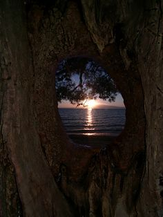 Sunset through cavity of an old tree on Thassos island northern Greece.