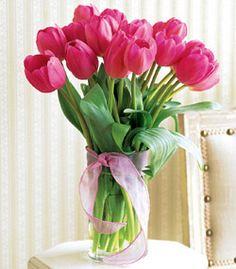 hot pink tulips (low pollen)