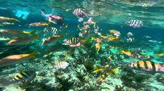 Grand Bahama Island -  Sea Safari Snorkel by Boat. Let's go? Visit cruisesbyjack.com