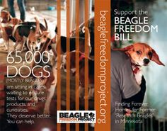PLEASE SIGN & SHARE to give research animals Life After Labs - ARME's Beagle Freedom Project