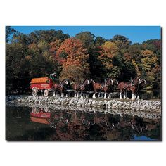 Clydesdales in Fall by Stone Pond Photographic Print on Wrapped Canvas