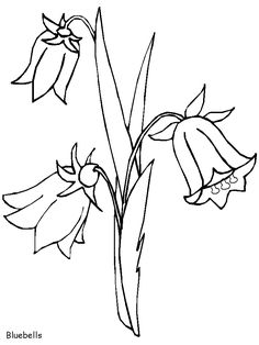 Blue Bell Colouring Pages