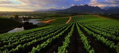 Access Our Free Napa Valley Winery Guide