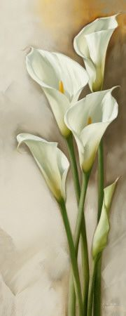 Callas Gracieux II | Visit our online-gallery for dozens of beautiful flower art-prints and posters at affordable prices : www.metropolasia.com/flower-prints