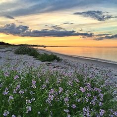 Hello everyone. I'm Bjorn (@bjornbaek) from Hjortshøj near Aarhus. I am your host for next 7 days. I want to share with you some of my favorite places in Denmark. I very often go on vacation to the beautiful island called Samsø (Samsoe). There are many beautiful places to visit on this island. I will show you more of this beautiful island later this week. Have a lovely day :-) #danestakeover #govisitdenmark by govisitdenmark