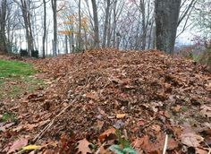 composting basics - A Way To Garden Remember - add some Green to Brown October 20 Compost Soil, Garden Compost, Edible Garden, Vegetable Garden, Leaf Compost, Composting 101, Gardening Zones, Hydroponic Gardening, Container Gardening