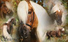 Haflinger Collage - Kohlfuchs Haflinger Luber | Flickr - Fotosharing!