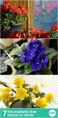 Don't let spring have all the fun. Light up your home with these beautiful flowers that bloom in winter.