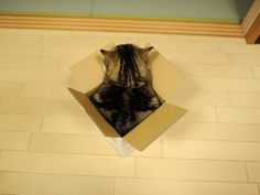 Maru in a very small box