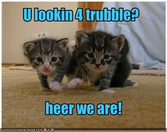 Funny cat photos to make your day better. These adorable cats are sure to bring a smile to you. You will feel all the cat love and cat fun you can get! funny cats are never going to be bad Cat Jokes, Funny Animal Jokes, Grumpy Cat Humor, Funny Cat Memes, Funny Dogs, Minion Humor, Grumpy Cats, Animal Humor, Minions Quotes