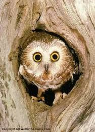 Image result for bird in tree hole