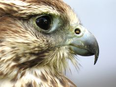 All types of eagle birds in the world with amazing facts. Eagles are some of the largest birds. They are at the top of the food chain, with some species feeding on big prey like monkeys and sloths. Hawk Pictures, Hawk Bird, Free High Resolution Photos, Power Animal, Your Spirit Animal, Eagle Eye, Birds Of Prey, Bird Watching