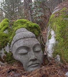 garden art stone moss covered buddha head face statue in the landscape