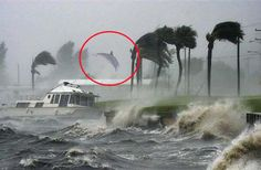 FORT PIERCE, FL - A photographer with The Weather Channel captured a dolphin that was caught in Hurricane Matthew's winds. Hurricane Matthew, Hurricane Pictures, Puerto Rico, I Wallpaper, Natural Disasters, Natural Phenomena, Nature Photos, Beautiful Creatures, Nature