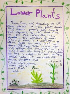 Waldorf ~ 5th grade ~ Botany ~ Ferns & Moss ~ main lesson book