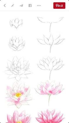 Fraulen Austen in lotus flower drawing fraulen austen Easy Flower Drawings, Flower Drawing Tutorials, Flower Sketches, Pencil Art Drawings, Easy Drawings, Art Tutorials, Drawing Sketches, Drawing Ideas, Drawing Step